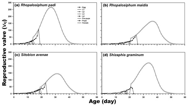 Age-stage-specific reproductive rate (vxj) of C. septempunctata reared on four aphid species.