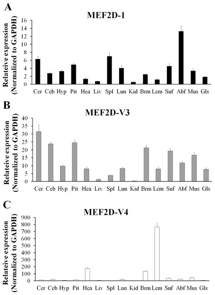 The expression pattern of different MEF2D variants in various tissues of chicken.