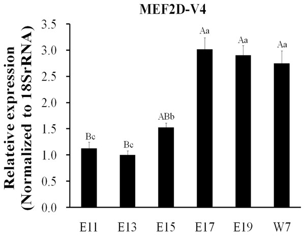 Expression patterns of MEF2D-V4 in leg muscle at different stage.