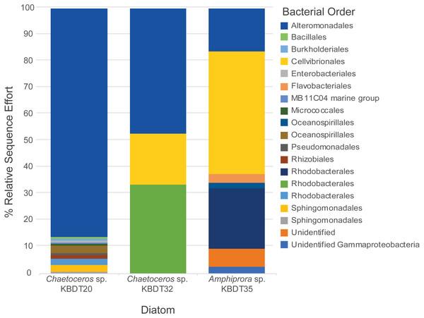Bacterial orders associated with each diatom host.