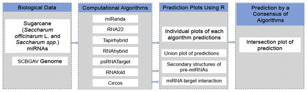 A schematic pipeline depicting the strategy of miRNA prediction from SCBGAV genome.
