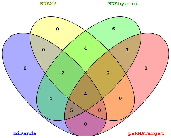 Venn diagram representing common sugarcane miRNAs predicted by all algorithms.