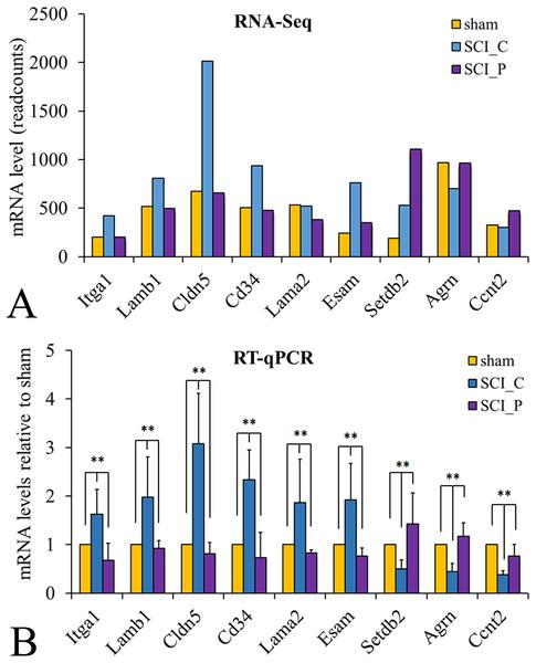 RT-qPCR verification of DEGs characterized by RNA-Seq.