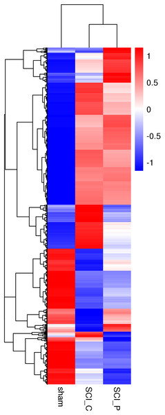 Hierarchical cluster analysis of DEGs.