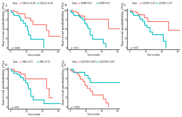 Kaplan–Meier (K–M) survival curves for top5 RNAs in the prognosis-related co-expression RNA network.