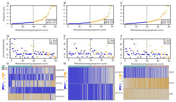 Prognostic scores, survival and expression clustering heatmap of the signature RNAs of ESCC patients.