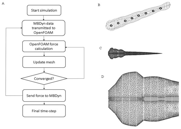 CFD simulation procedure and mesh geometry of the fish.