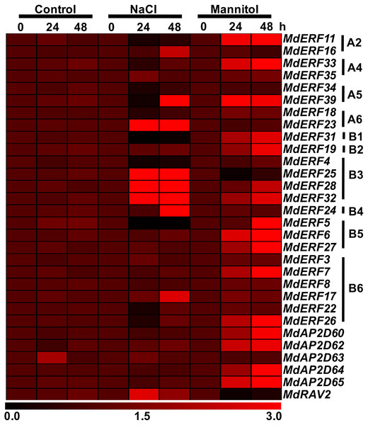 Expression heatmap of apple AP2/ERF genes under normal growth, mannitol and salt treatments.