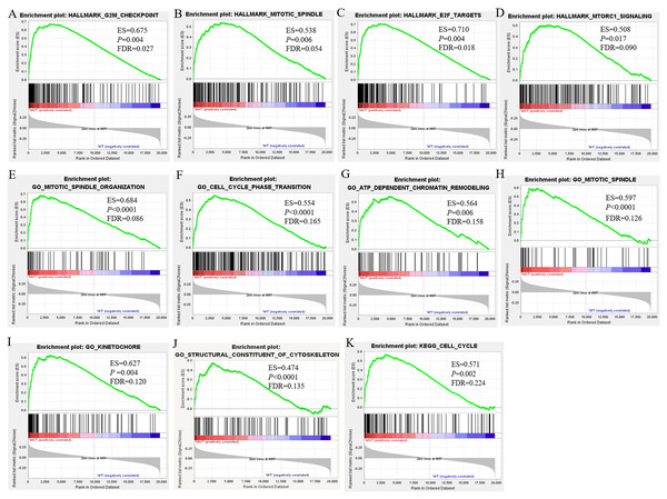 GSEA Enrichment analysis results of BRCA1/2 mutations in breast cancer patients.