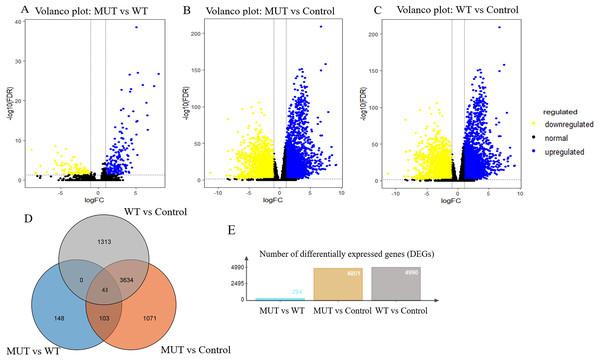 Volcano plot for DEGs and Venn plot of three independent DEGs identifications.