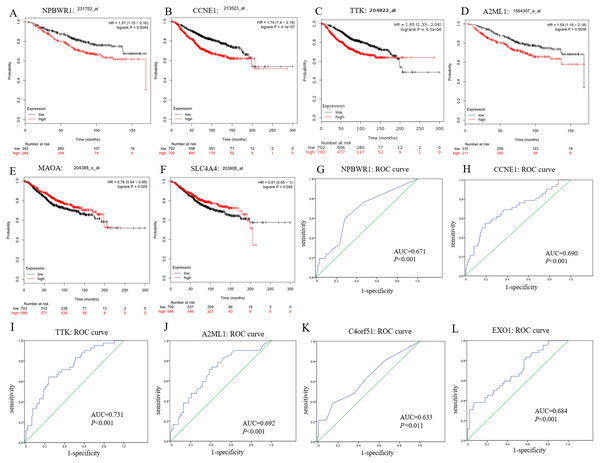 Prognostic and diagnostic significance of identified hub genes for breast cancer.