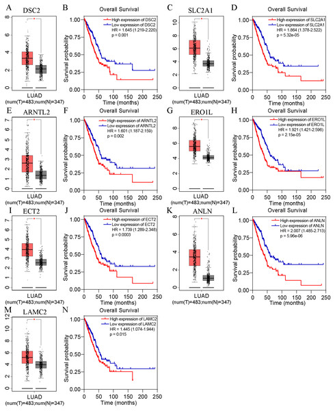 The expression and survival analysis of the co-expressed genes from GEPIA online database.