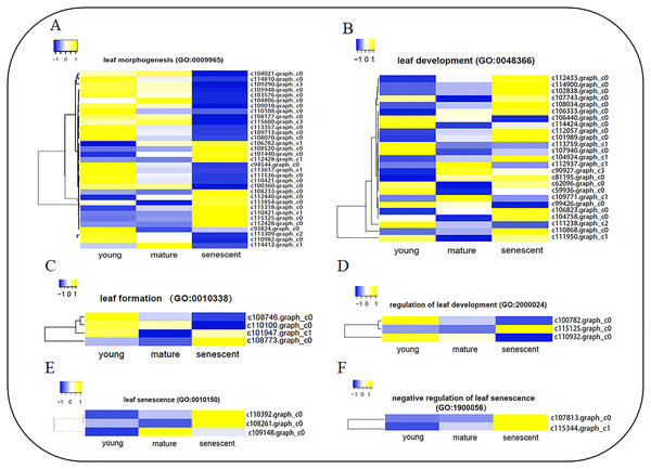 The heat map showing FPKM of DEGs involved in six biological processes by GO enrichment analysis.