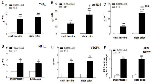Expression of Inflammatory markers in the ileum and colon after DNBS-induced colitis.