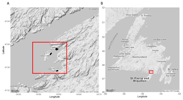 Map of our study sites in Little Harbour East and Little Bay East, Fortune Bay, off the southern coast of Newfoundland.