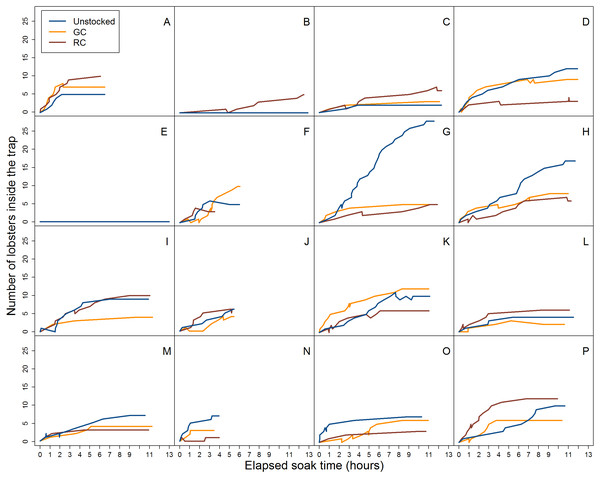Video data analysis of lobster accumulation over the elapsed soak time for entries and exits through the trap entrance only (i.e., primarily large-bodied lobster).