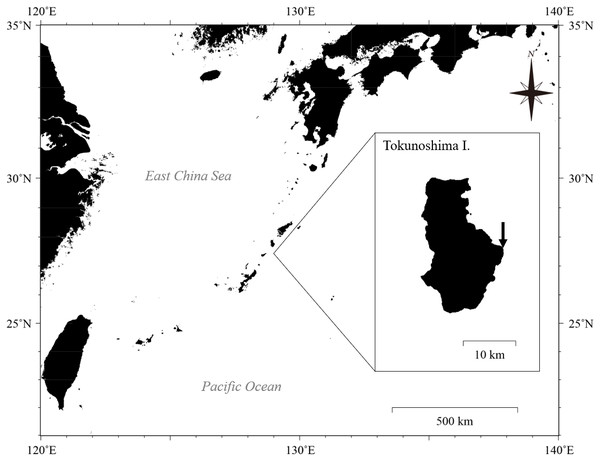 Location of Tokunoshima Island and the sampling site (arrow in inset) for the Palythoa specimens in this study.