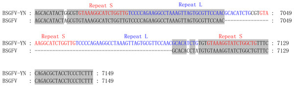 Comparison of non-coding region sequences of the BSGFV-YN with BSGFV Goldfinger.