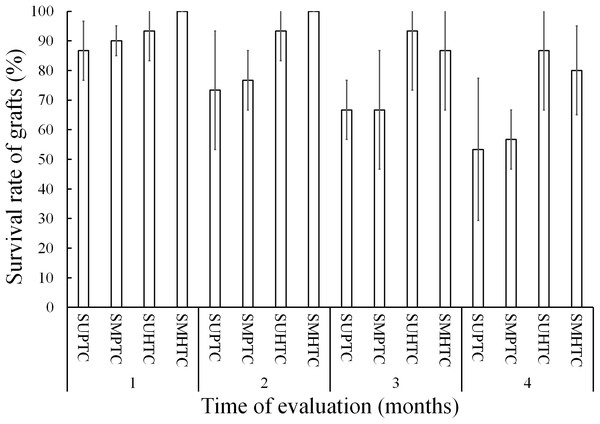 Monthly survival rate in grafts with scions from the pure species Pinus engelmannii and from the P. engelmannii × P. arizonica hybrid for each treatment, in the first four months of evaluation.