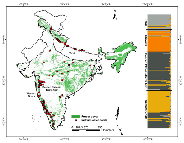 Genetic sampling and leopard population structure across the Indian subcontinent with forest cover map and leopard sampling locations used in this study.