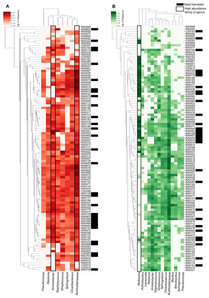 Heatmap representation of Pheidole 'core' microbiome showing the frequency of each ASV.