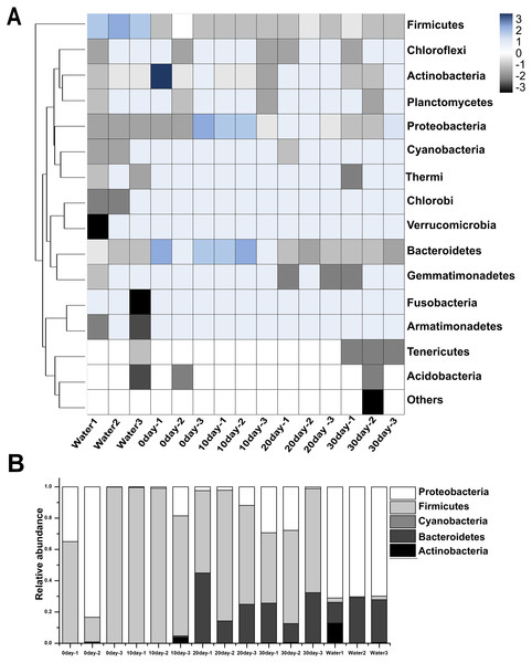 Taxonomic compositions of turtle intestinal microbiomes and water microbiomes from different samples at the phylum level.