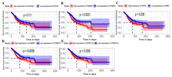 Relationship between overall survival (OS) and the five key hub genes in the TCGA dataset.