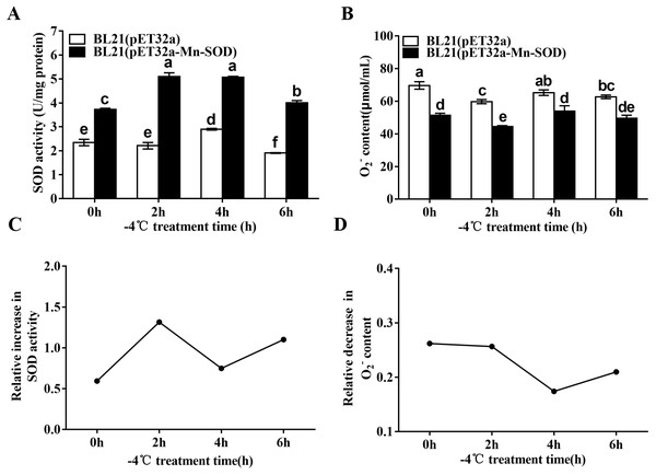 SOD activity and O2•− content in the MpmMn-SOD overexpressed BL21 (pET32a-mMn-SOD) at −4 °C cold stress.