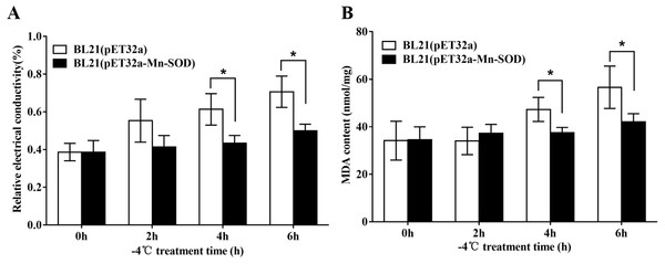 Protective effect of MpmMn-SOD on bacteria BL21(pET32a-mMn-SOD) at −4 °C.