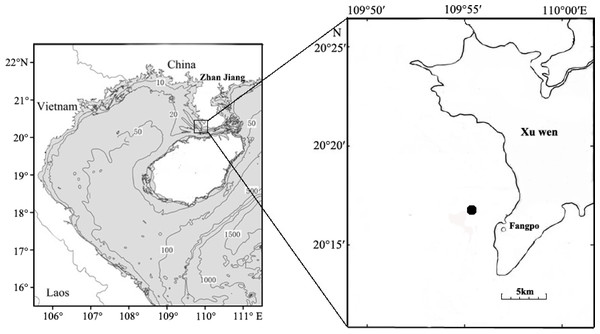 Sampling locations for fish eggs on the Xuwen coral reef.