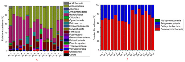 Stacked bar chart showing relative abundance of microbial composition Acanthopagrus schlegelii (As) and Halichoeres nigrescens (Hn) eggs at the phyla except the phylum of Proteobacteria (A) and the classes level of Proteobacteria (B).