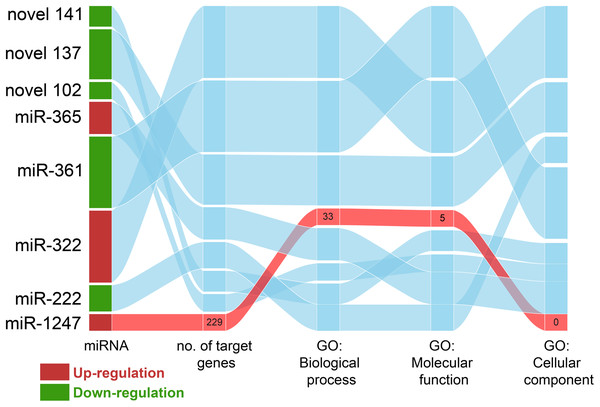 The relationship between miRNAs in CPV and target genes.