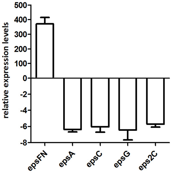 RT-qPCR analysis of the expression levels of epsFN, epsA, epsC, epsG and eps2C in S. thermophilus 05epsF.