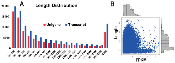 Transcript and unigene length distribution; and the distribution of the FPKM value corresponding to the distribution of unigene length.