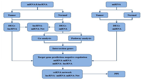 The flow chart for bioinformatics analysis in this study.