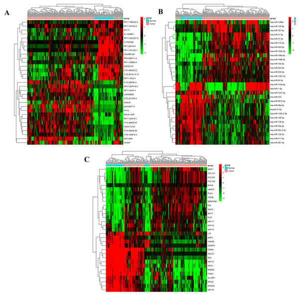 Cluster analysis of 15 up- and down-regulated differentially expressed lncRNAs, microRNA and mRNAs in HNSCC tissues and adjacent normal tissues from TCGA database.