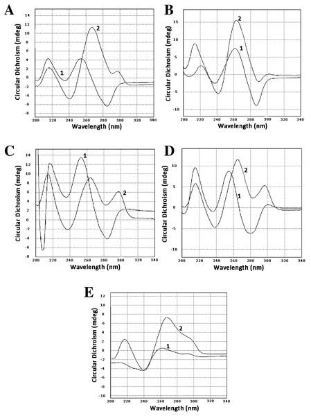 Circular dichroism spectra.