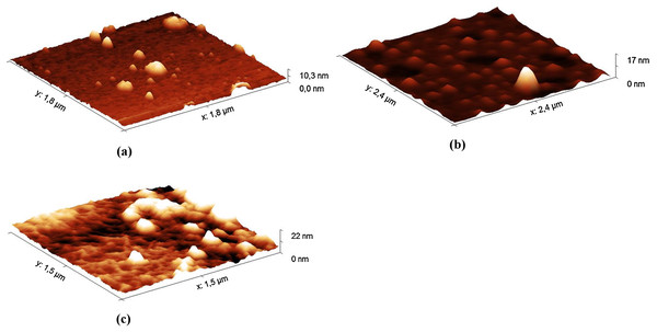 AFM images (in tapping mode) of the hydrolysates of the Hyaluform HA-based filler: (A) 5 min, (B) 40 min and (C) 120 min of HA hydrolysis with the HPC homogenate.