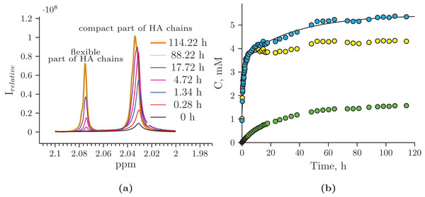 Hydrolysis of Hyaluform HA by purified HPC homogenate: (A) changes in the 1H signal of the N-acetyl-d-glucosamine acetyl group of HA chains in 1H-NMR spectra; (B) accumulation kinetics of the 1H signal of the N-acetyl-d-glucosamine acetyl group of HA chains (integral under the peaks).