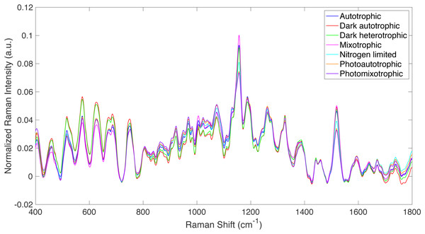 Raman spectra from all culture conditions studied.