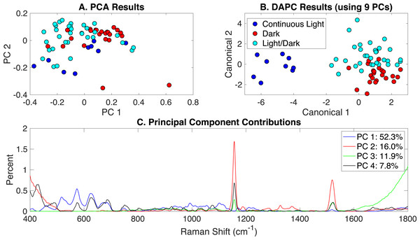 Rametrix™models for the illumination-induced phenotypes study.