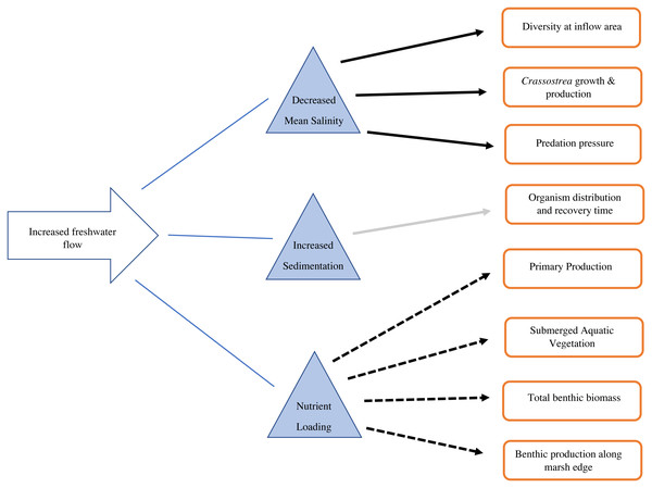 Conceptual diagram of the consequences of increased freshwater flow on the benthic community.