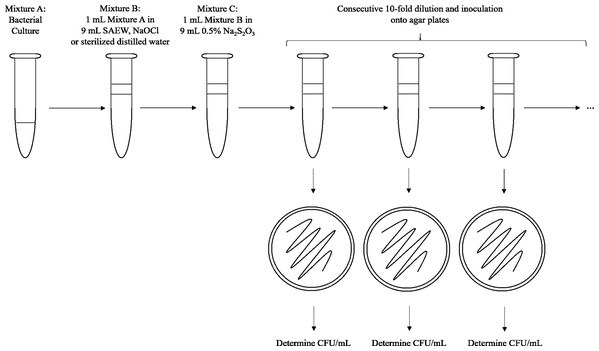 Experimental sequence for in vitro tests.