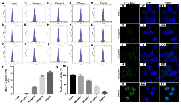 Identification of the optimal concentration of BSA when treating MPC5 cells.