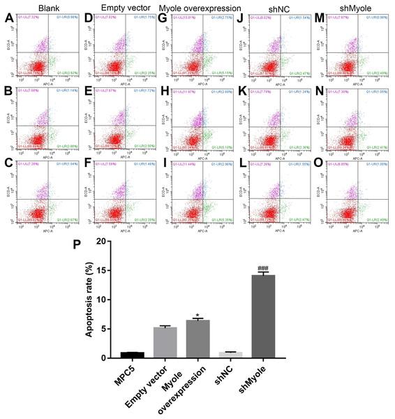 Myo1e may promote MPC5 cell apoptosis.