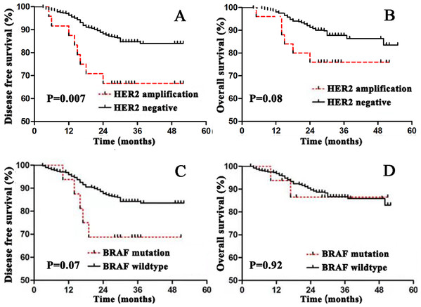 Survival curves for disease free survival (DFS) and overall survival (OS) in stage I–III colorectal cancer according to HER2 or BRAF status.