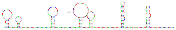 Predicted secondary structure of putative control region of A. vulgaris mitogenome.