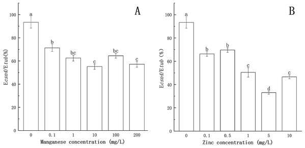 Effect of Mn and Zn on csn4 expression of P. nicotianae at the stage of sporangiogenesis based on Ecsn4/Etub.