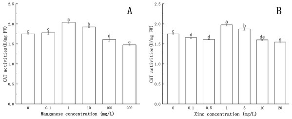 Effect of Mn and Zn induced oxidative stress on CAT activity of P. nicotianae at the stage of sporangiogenesis.