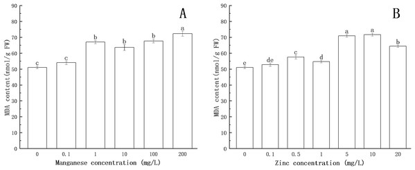 Effect of Mn and Zn lipid peroxidation based on MDA content of P. nicotianae at the stage of sporangiogenesis.